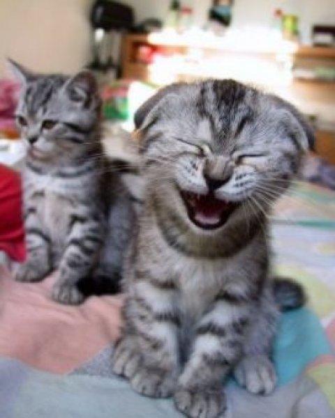 cat-pic-smiech