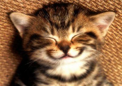 cat-pic-smile