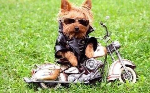 lupo-marina-motorcycle-gear-img_6195