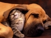 cat-dog-pic-funnycatpicture03
