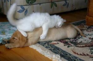 Cat & Dog Pic