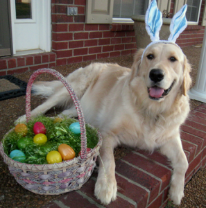 Easter Egg Dog Pic