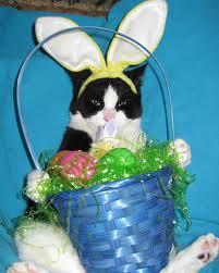 Easter Kokomo Pic