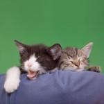 kitty-yawn-150x150